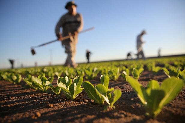 mercado de trabalho no agronegócio