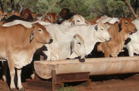 suplementação de bovinos