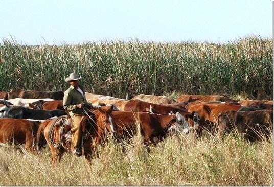 pecuária de corte no Paraguai