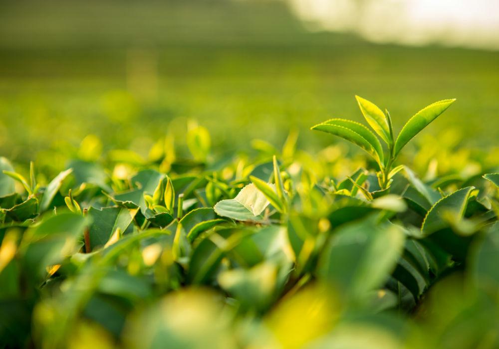 importância da agricultura