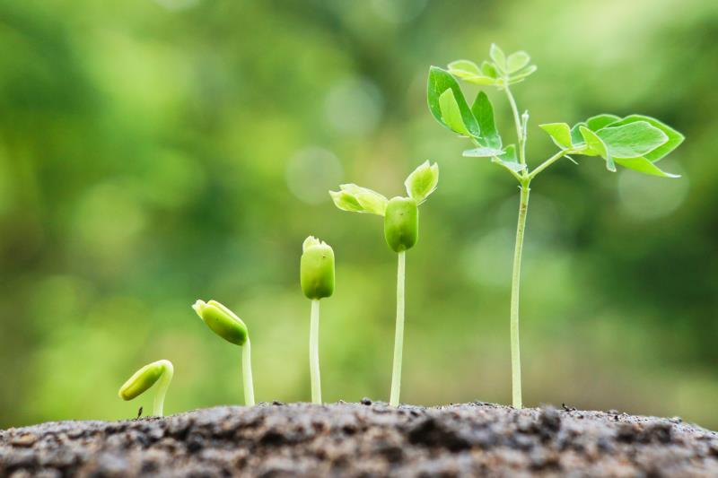 fertilizante nitrogenado