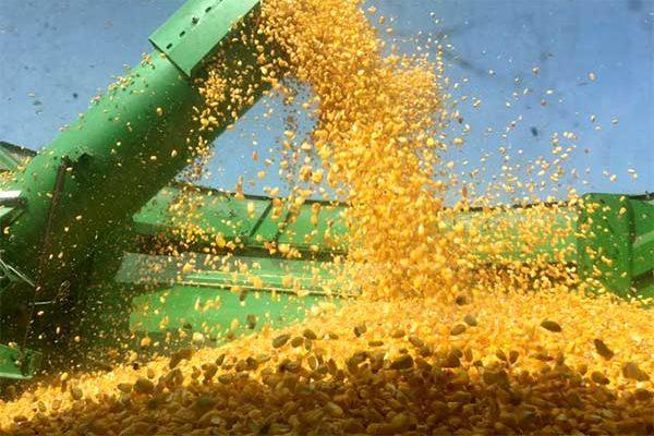 previsão do preço do milho