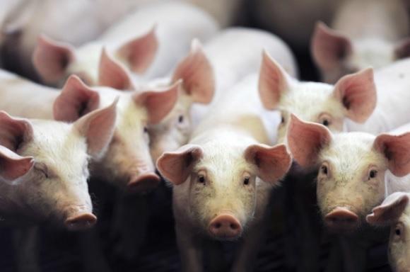 antibióticos na produção animal