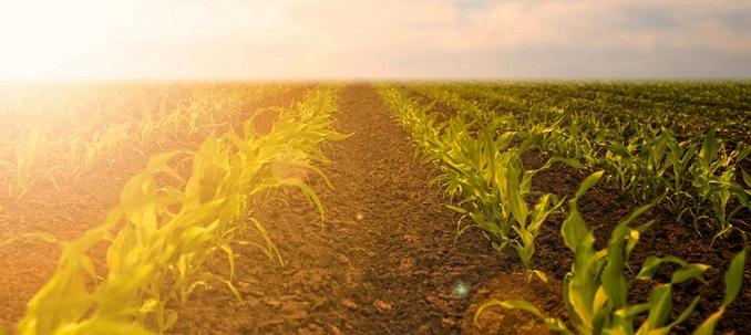 desafios do agronegócio em 2018