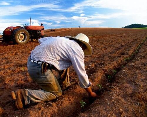 emprego na agropecuária