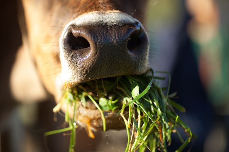 produção animal sustentável