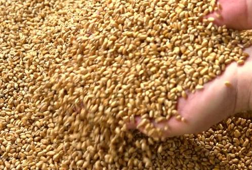 preços corrigidos da soja