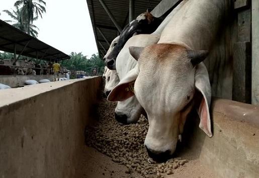 Custos de produção de bovinos confinados