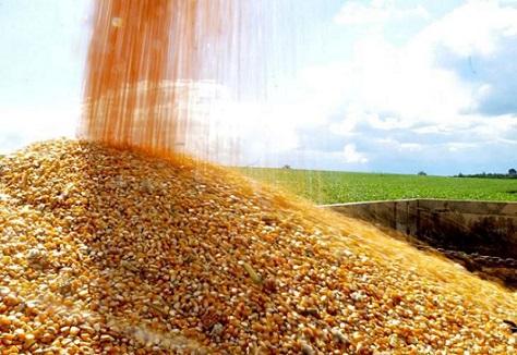 custos da produção de milho