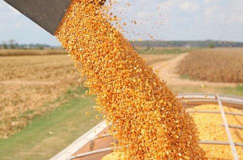 estimativa da produção de grãos