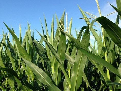 concentração da agricultura