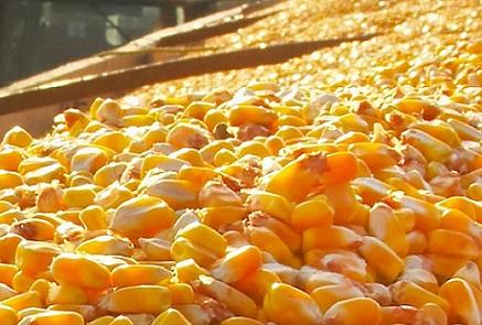 dados da exportação de milho