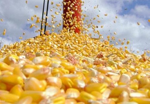dados históricos da produção de milho