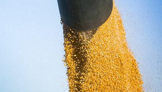 exportação de milho em julho