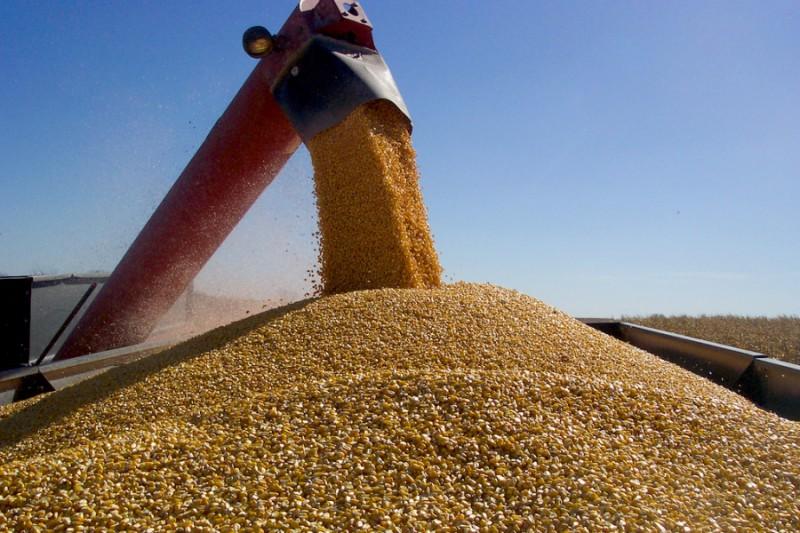 estoque de milho