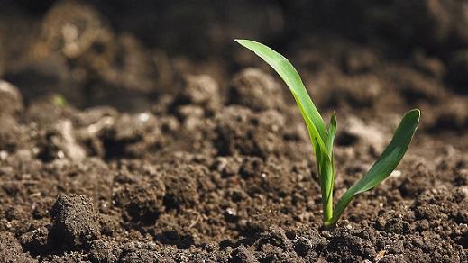 custo de produzir milho