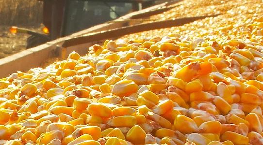 quanto o Brasil exporta de milho