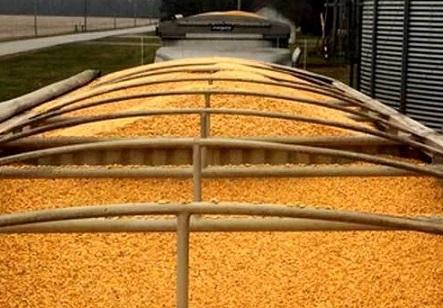 perdas no transporte de grãos