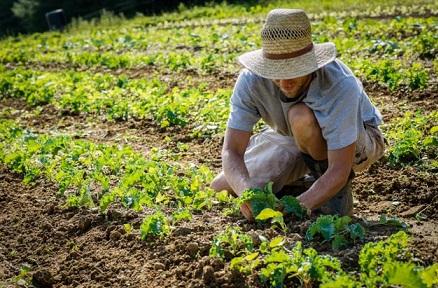 emprego no agronegócio