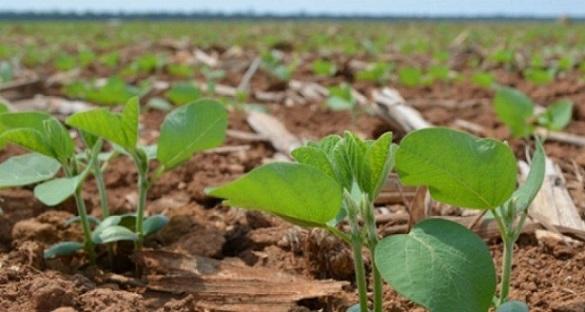 perspectivas do mercado de soja