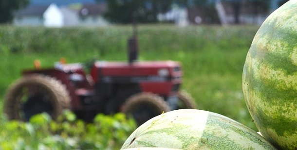 conceito de agronegócio