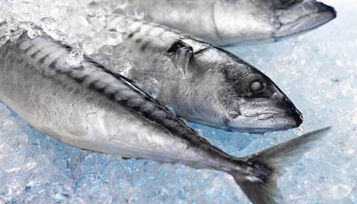 exportação de peixes do Brasil