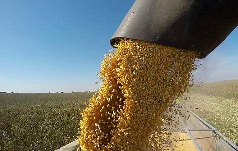 exportação de milho