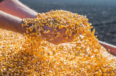 desafios da comercialização de milho