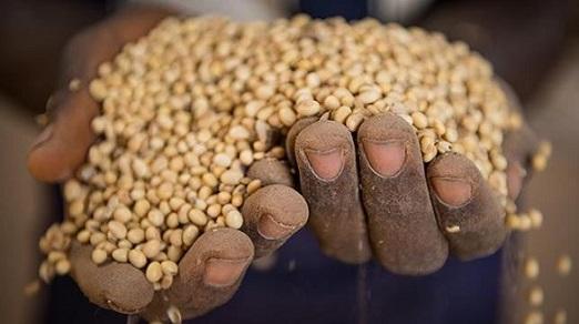 produção de alimentos é suficiente