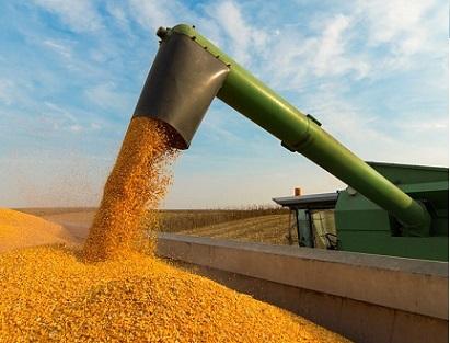 preços do milho