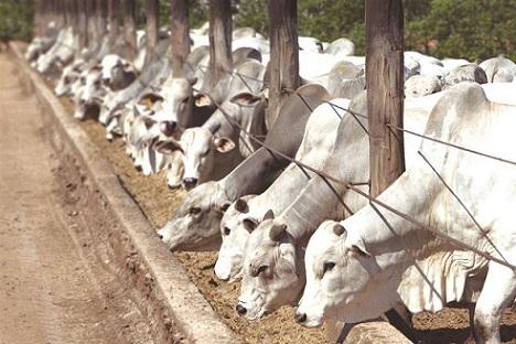 custo de produção de proteína animal