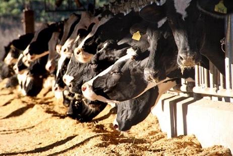 quanto vale o dejeto de vacas