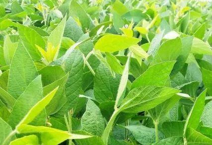 uso do nitrogênio na agropecuária