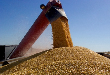 preço do milho em novembro