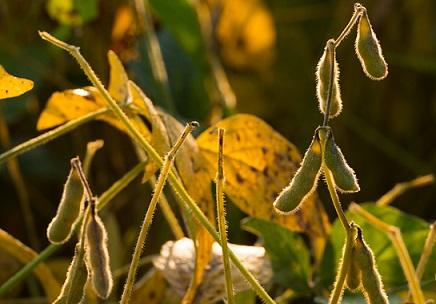 preço da soja em outubro