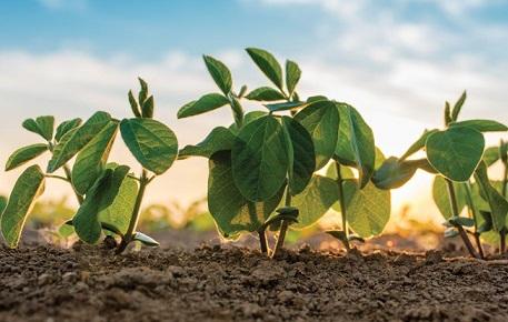 desafios da produção de soja