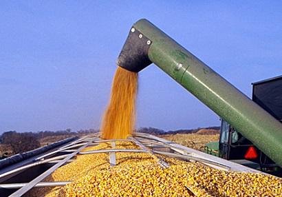 futuro do milho