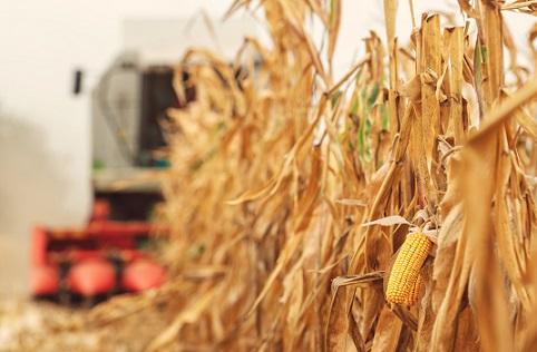 principais importadores de milho