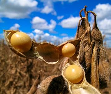 principais importadores de soja do Brasil