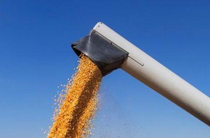 exportação de milho caiu