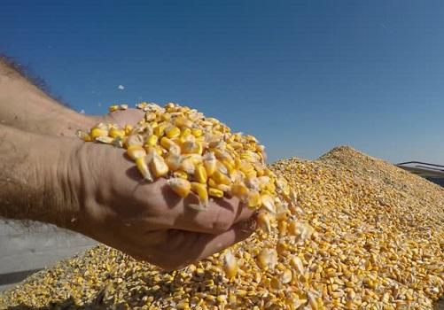 preço do milho