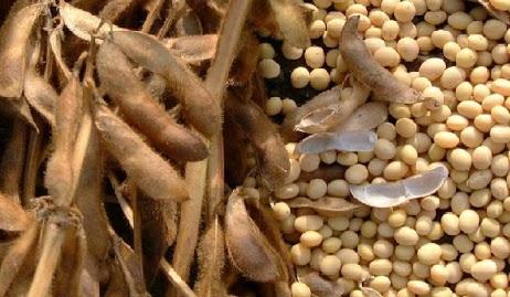 preço da soja exportada