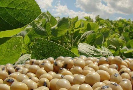 importação de soja pelo Brasil