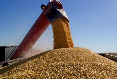 preço futuro do milho