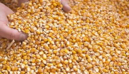 variação mensal do preço do milho