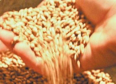 maiores exportadores de produtos do agronegócio