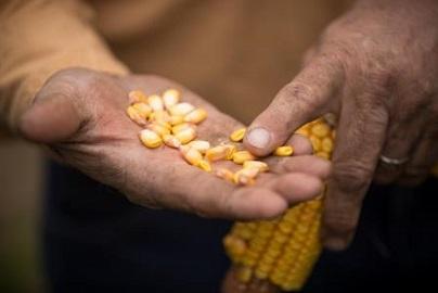 preço corrigido do milho