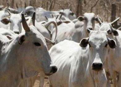 maiores rebanhos e produtores de carne bovina