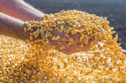 maiores importadores de milho