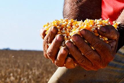 preço anual do milho